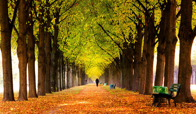 Walk-in-Royal-Garden-avenue-in-autumn_image_full
