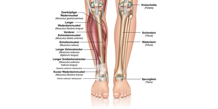 Anatomie Unterschenkel und Schienbein
