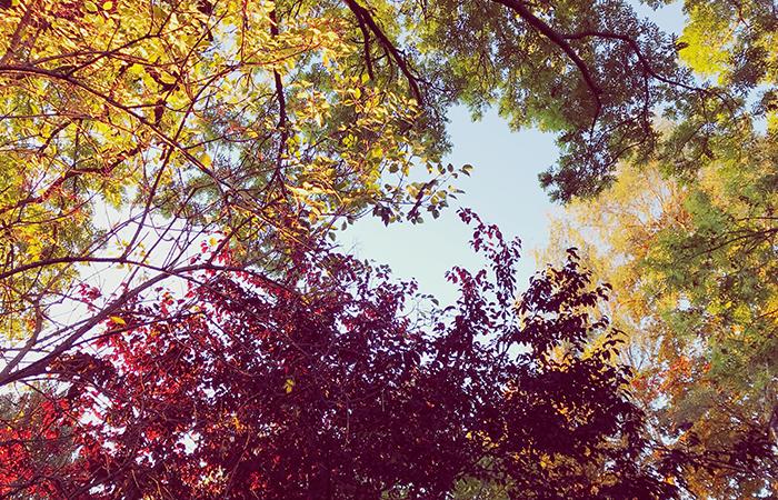 Herbst, Laub, Laufen, Joggen im Herbst, buntes Herbstlaub,