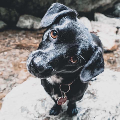 Hund Flocki von runskills